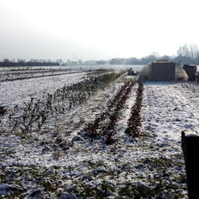 Schneebilder_2018-02b