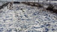 Schneebilder_2018-02d